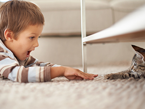 Kids, Pets, and Your Carpet